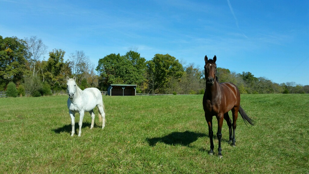 Equine Assisted Therapy-2 Quarternote Counseling