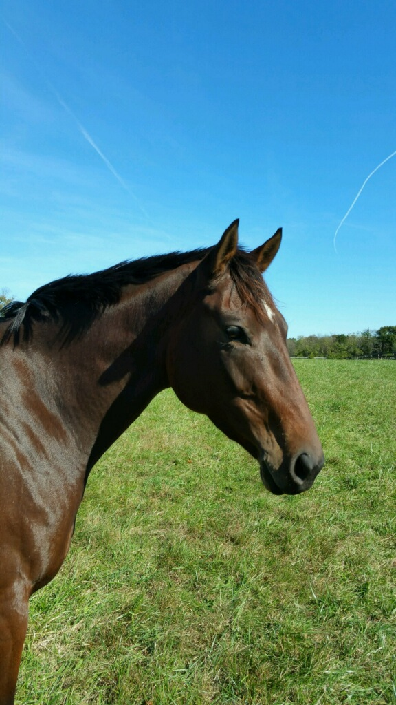 Equine Assisted Therapy-1 Quarternote Counseling